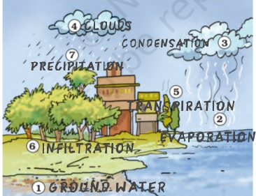 NCERT Solutions Class 7 Science Water: A Precious Resource Water Cycle