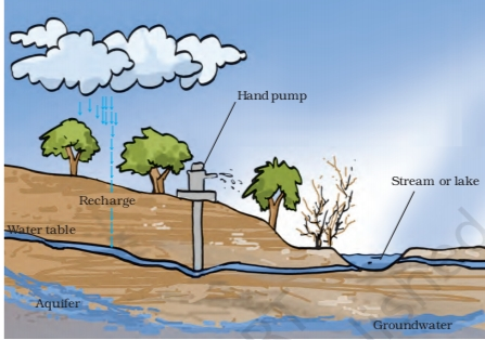 NCERT Solutions Class 7 Science Water: A Precious Resource Groundwater and Water Table