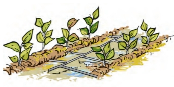 NCERT Science Chapter 16 Drip Irrigation