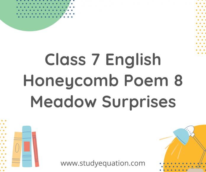 class 7 english honecomb poem 8 meadow surprise