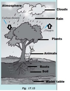 NCERT Solutions for Class 7 Science Forests Our Lifeline : Answer 10
