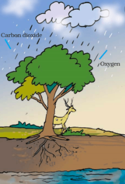 Question 10 : NCERT Solutions for Class 7 Science Forests Our Lifeline