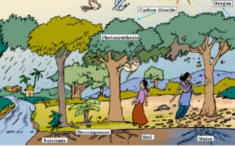 NCERT Solutions for Class 7 Science Forests Our Lifeline : Green lungs