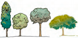 NCERT Solutions for Class 7 Science Forests Our Lifeline : Different crown shapes