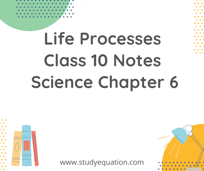 Life process class 10 notes science chapter 6