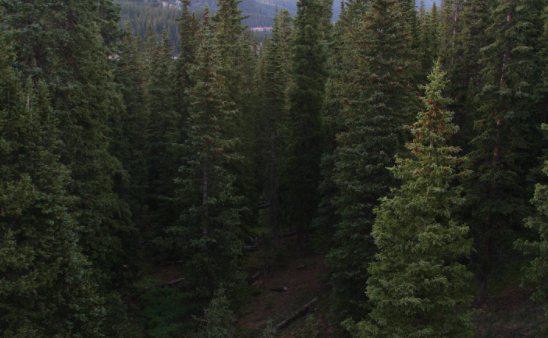 NCERT Solutions for Class 7 Social Science Geography Chapter 6: Natural Vegetation and Wildlife : Coniferous Forests