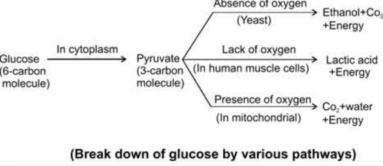 Life Processes Class 10 Notes Science Chapter 6 : The chart of the processes.