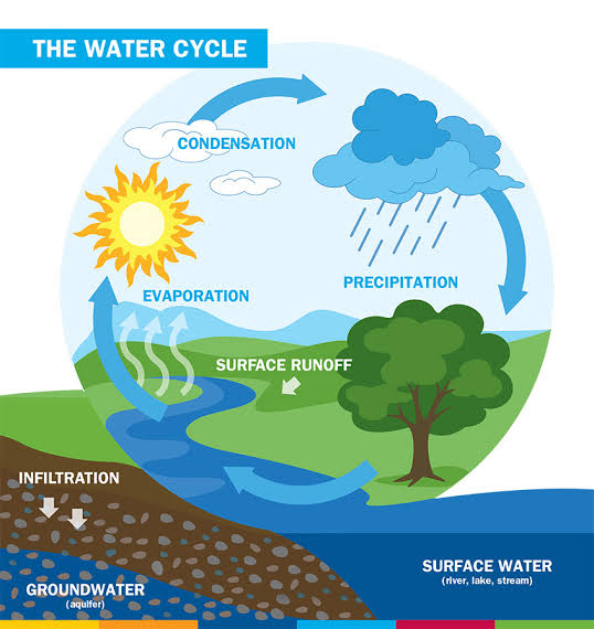NCERT Solutions Class 7 Social Science Geography Water Water Cycle
