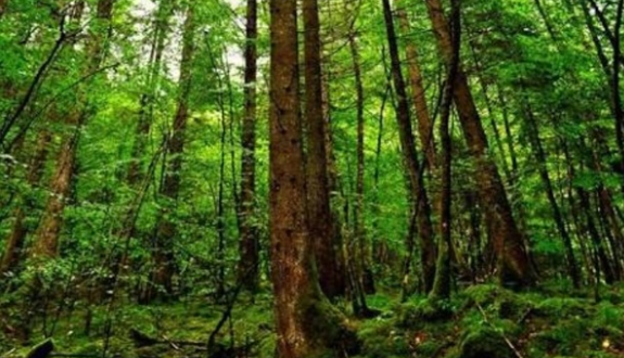 Tropical Evergreen Forests